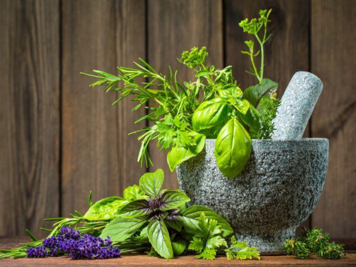 ما هي أفضل الأعشاب لتثبيت الحمل؟