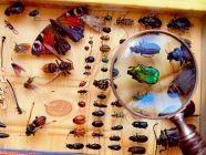 أبرز أنواع الحشرات وأهم المعلومات عنها