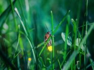 الحشرات المضيئة: أهم الحقائق والمعلومات