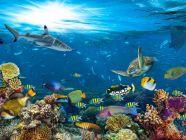الحيوانات البحرية: خصائصها، وأنواعها، وأكثر
