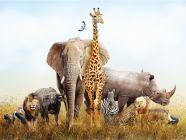 الحيوانات البرية: أنواعها، وصفاتها، وأكثر