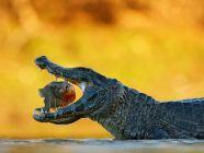 الحيوانات المفترسة: كل ما يهمك معرفته