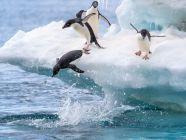 الطيور البرمائية: خصائصها، وأنواعها، وأكثر