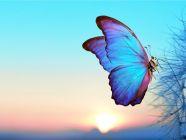 عالم الفراشات، أنواعها وسلوكها، معلومات شيقة!