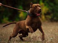 كلاب شرسة: أنواعها وأهم المعلومات عنها