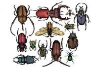 كم عدد أرجل الحشرات؟