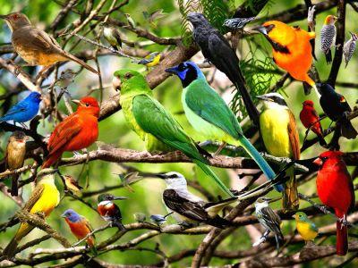أنواع الطيور وطعامها: أهم الحقائق والمعلومات