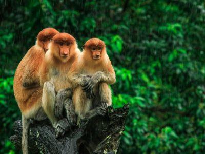 القرد: أنواعه، وموطنه، وأكثر