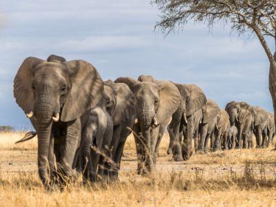 ما لا تعرفه عن الفيل: أهم الحقائق والمعلومات