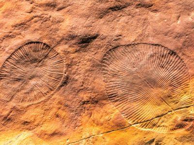 ما هو أقدم حيوان على وجه الأرض؟
