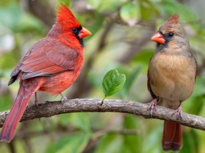 معلومات عن التزاوج بين الطيور وطرق تكاثرها
