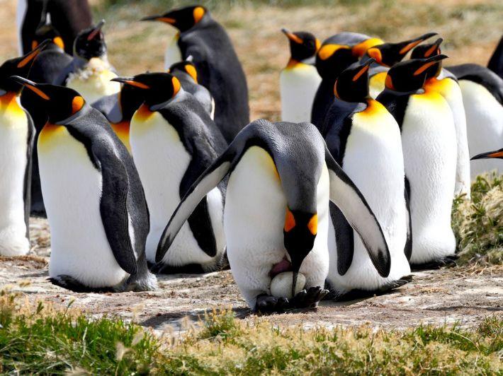 اعرف أكثر عن البطريق: الطائر الذي لا يطير
