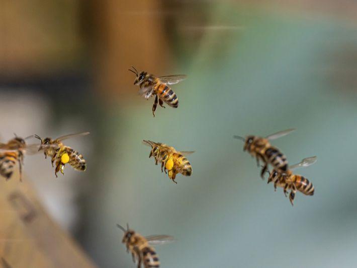 الحشرات الطائرة: الأنواع، والصفات، وأكثر