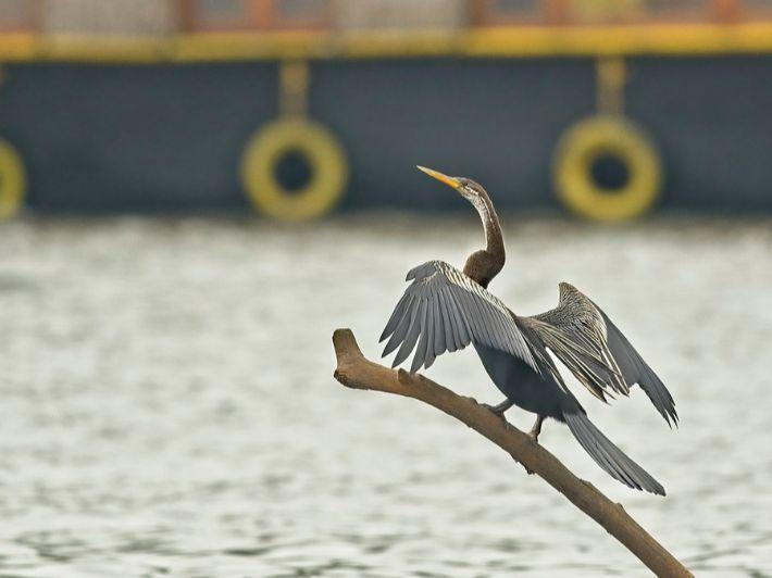 تعرف على طائر القاذف الأفريقي، أو الطائر الثعبان