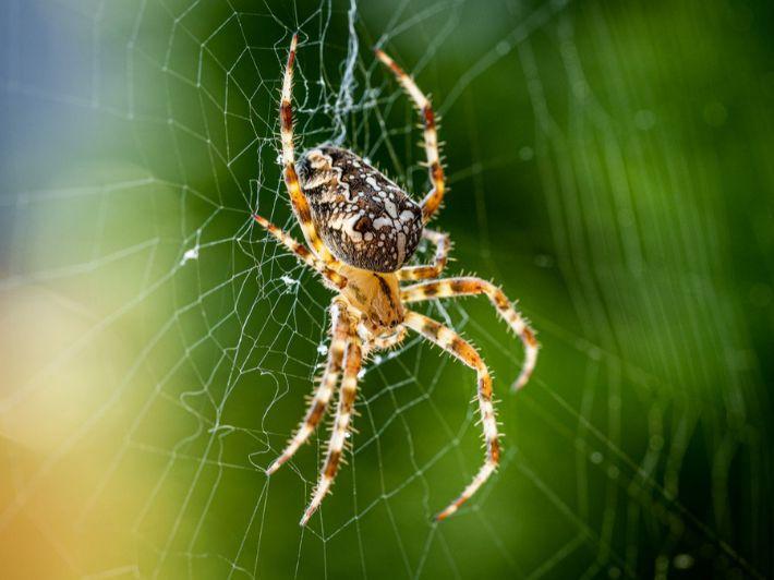 حقائق ومعلومات عن العنكبوت
