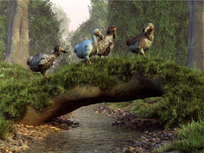 طائر الدودو المنقرض: تعرف عليه