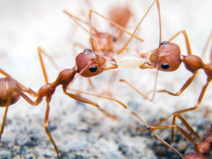 كل ما ترغب في معرفته عن عالم النمل