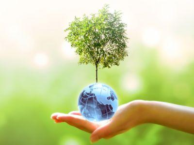 عيد الشجرة: أهم الحقائق والمعلومات