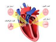 ما هي صمامات القلب وما وظيفتها وأمراضها