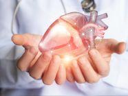 هل يمكن الوقاية من تضخم عضلة القلب؟