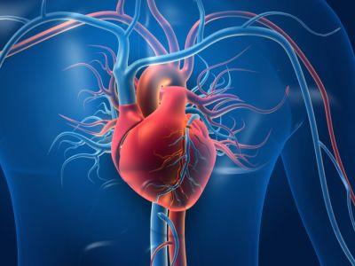 ما هو وتين القلب وما أهميته؟