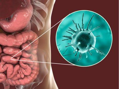أنواع طفيليات الامعاء وأعراضها