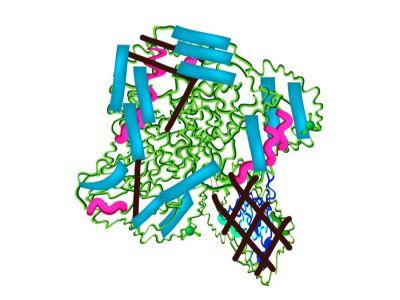 ما هي إنزيمات البنكرياس وما وظيفتها؟