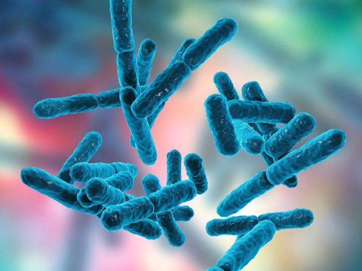 الفرق بين أنواع حبوب البكتيريا النافعة والفائدة التي تقدمها