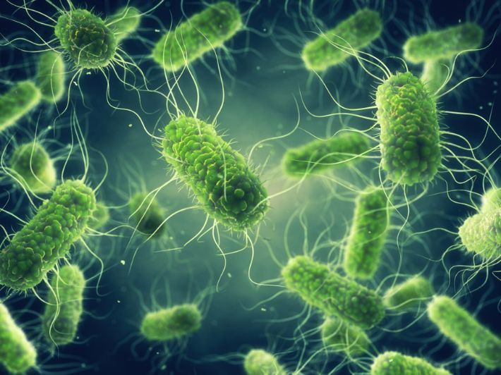 تعرف على بكتيريا السالمونيلا وأبرز صفاتها