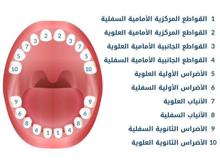 بالصور ترتيب ظهور الأسنان عند الرضع