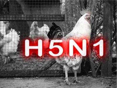 أسباب ظهور إنفلونزا الطيور